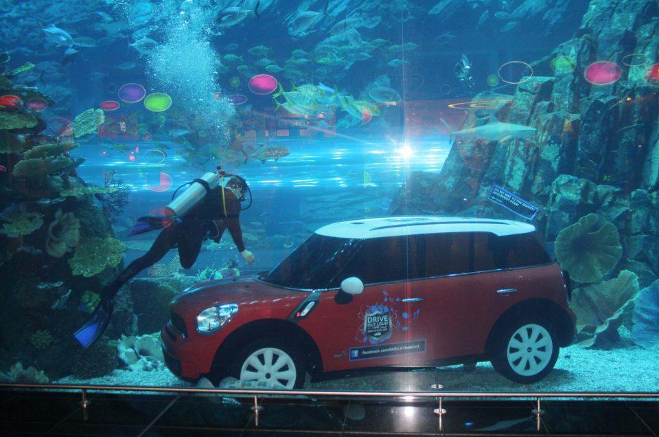Где посмотреть подводный мир. Лучшие океанариумы