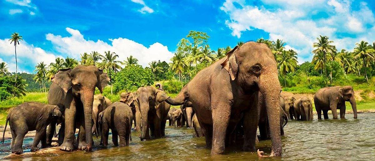 Шри-Ланка. Супер Новый год