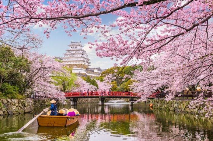 Лучшая сакура Японии