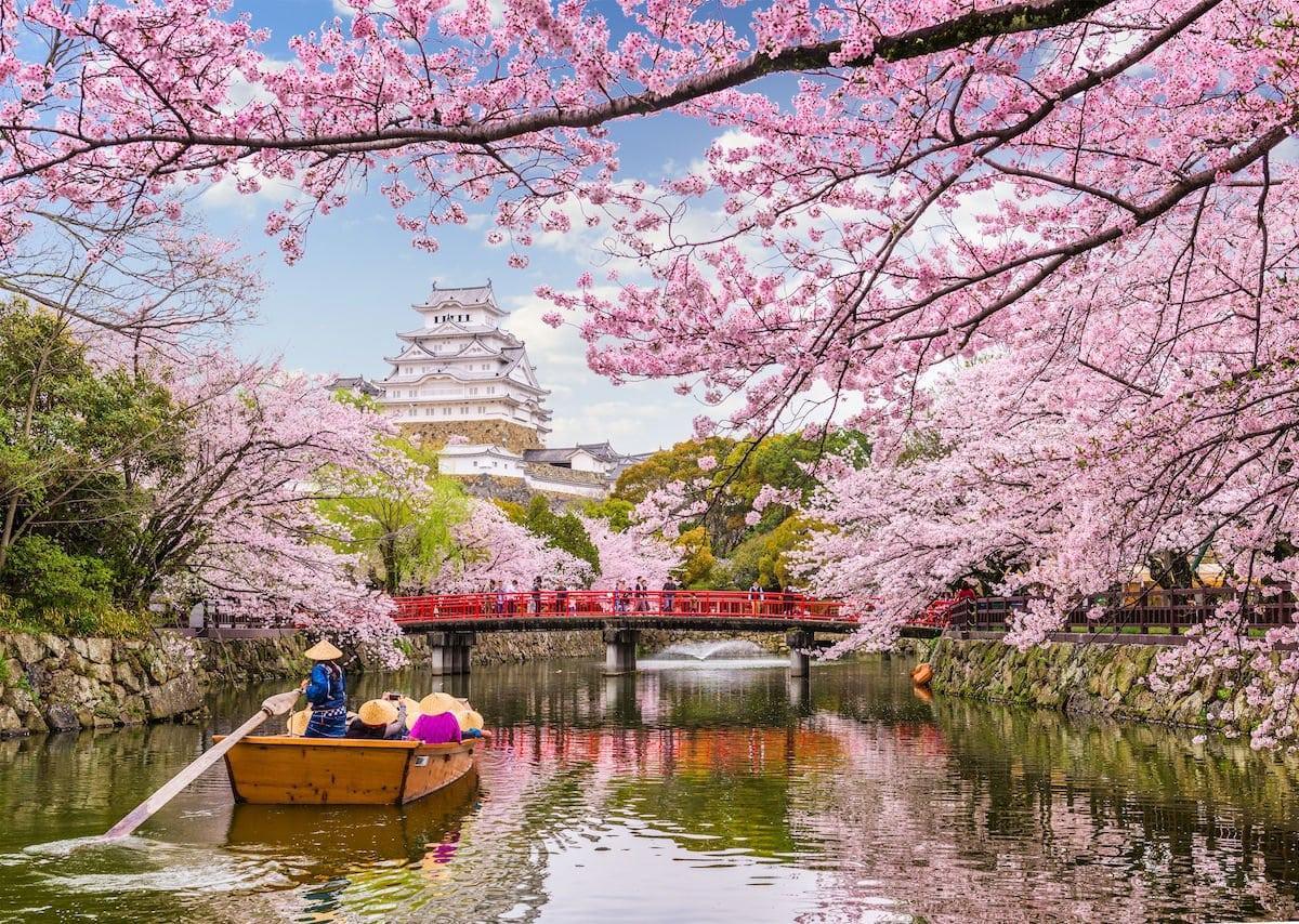 Japans schönste Kirschblüten